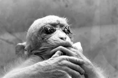 Monkey Vivisection
