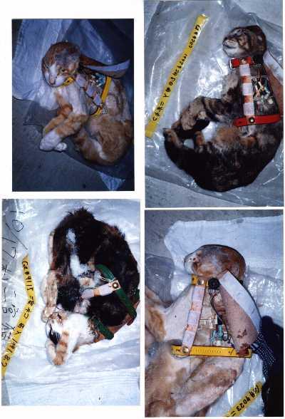 Photos choc pour faire réagir - Page 2 Foto10